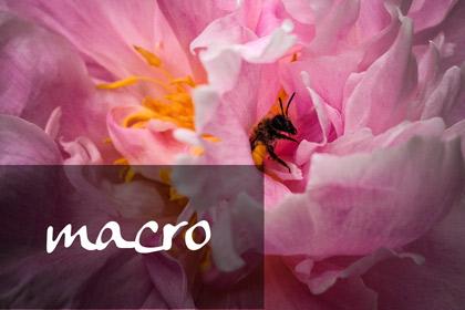 album_macro