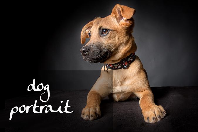 album_dog portrait front
